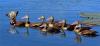DuckDog.png