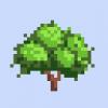 Avocado Tree.png